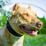 Nylon Dog Collar of Handy Design and Highest Quality