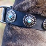 Dog Collar of Leather with Blue Stones