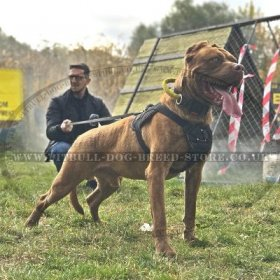 Extra Strong Sport Dog Harness for Bandog