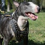 Royal Dog Harness for English Bull Terrier, Luxury Style