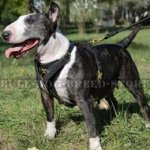 Leather Dog Harness for Bull Terrier Walking, Training, Tracking
