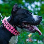 Fashion Dog Collar for Amstaff Walking in Style