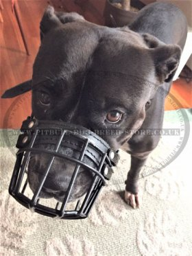 Basket Dog Muzzle, Perfect for Pitbull, Rustproof Wire, Best!