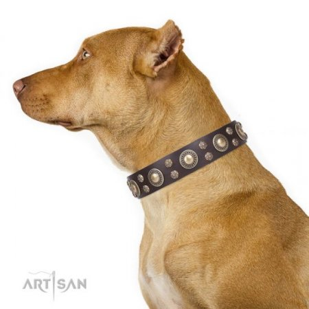 "Designer Pitbull Dog Collar ""Flower Melody"" FDT Artisan"