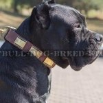 Dog Collar for Cane Corso, Leather with Brass Plates