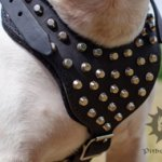 Studded Leather Dog Harness Padded for English Bull Terrier
