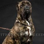 Best Harness for Cane Corso Tracking and Training