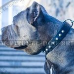Cane Corso Leather Collar with Nickel Pyramids Row