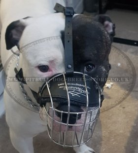 Bestseller! Wire Dog Muzzle for English Staffy, Basket Design