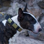 Wide Bull terrier Collar of Style with Brass Plates