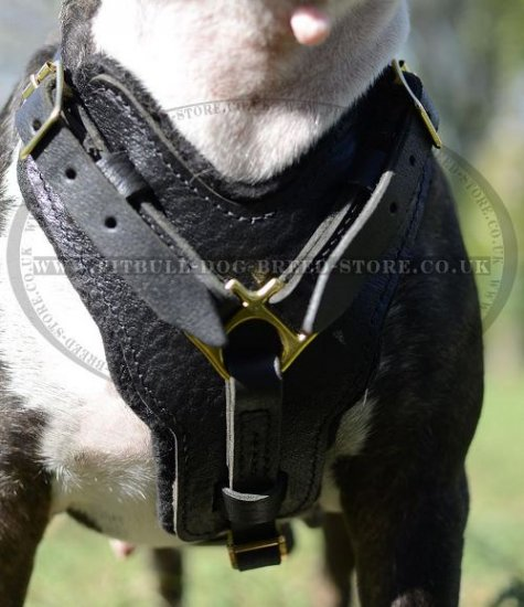 Bestseller! Padded Dog Harness Leather for Strong Bull Terrier - Click Image to Close
