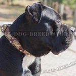 Cane Corso Mastiff Collar with Nickel Cones and Brass Plates
