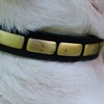 Dog Collar Necklace with Brass Plates for English Bull Terrier