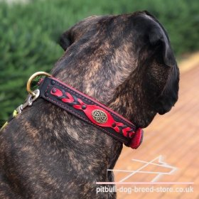 "Thick Pitbull Dog Collar ""Heavy Fire"" of Black and Red Leather"