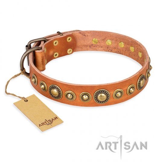 """Feast of Luxury"" FDT Artisan Brass Studded Walking Dog Collar"