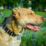 Rich Brand Dog Collar for Pitbull Walks
