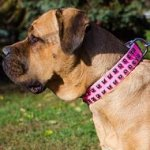 Cane Corso Leather Dog Collar Pink, Female Design