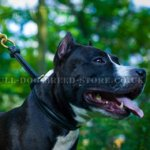 Amstaff Choke Collar for Success in Obedience Training