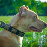Staffy & Pitbull Dog Collar of Trendy Look
