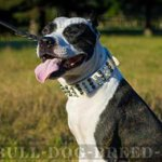 Lordly White Dog Collar for Amstaff