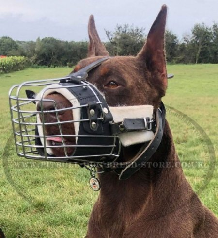 Padded Basket Muzzle for Walking/Training/Visiting Vet