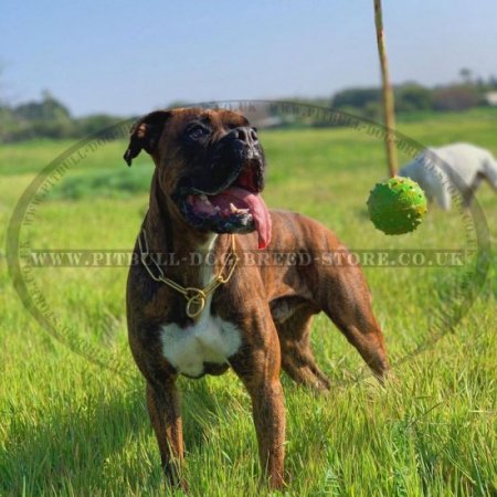 Dog Toy Ball of Natural Rubber on Rope for Staffy and Pitbull