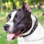 Luxury Dog Collar for Amstaff, Leather Nappa Padded