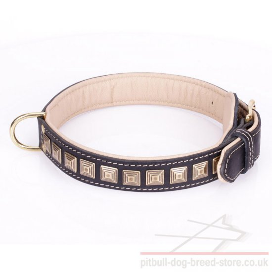 Wide Dog Collar for Pitbull
