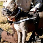 Reflective Dog Harness for Pitbull Training and Walking