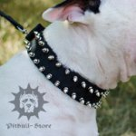 High Quality Dog Collar of Nylon for Bull Terrier with Spikes