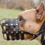 Muzzle for Staffy UK of Nappa Padded Leather, Royal Design
