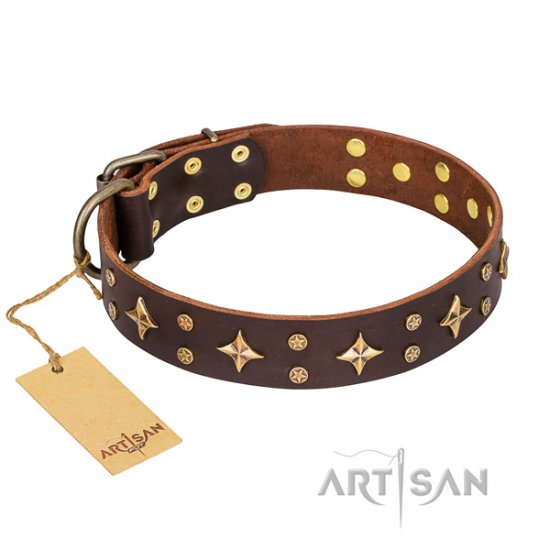 """High Fashion"" FDT Artisan Brown Star Dog Collar for Staffy"