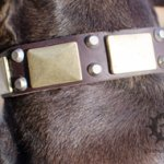 Pitbull Gorgeous Leather Collar with Brass Plates and Pyramids