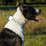 Splendid Pitbull White Leather Dog Collar