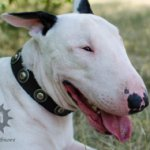 Leather Dog Collar with Vintage Round Studs for Bull Terrier