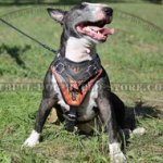 "Handmade Dog Harness, Exclusive ""Flame"" Style for Bull Terrier"