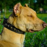 Cool & Strong Studded Dog Collar for Pitbull and Staffy