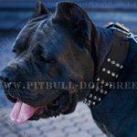 Cane Corso Leather Collar Extra Large with Cones