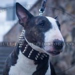 Spiny 3 Inch Dog Collar for Bull Terrier Walks