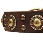 "Dog Collar Trends with ""Gold"" Conchos and Studs for Amstaff"
