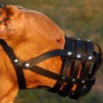 Leather Dog Muzzle, Super Ventilated for Pitbull and Staffy