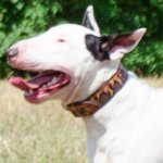 "Handmade Dog Collar with ""Flame"" Painting for Bull Terrier"