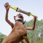 Dog Dummy Fire Hose for Pitbull, Staffy Bite Training