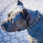 Cane Corso Dog Collar of Leather with Studs and Spikes, Brand