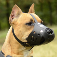 Leather Dog Muzzle for Daily Usage, Pitbull Comfort and Safety