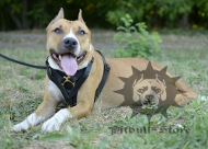 Tracking Dog Harness for Amstaff |