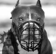 Wire Muzzle Rubber Covered for Pitbull, Ideal for Winter