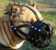 Leather Dog Muzzle Royal Padded for Pitbull | Soft Dog Muzzle
