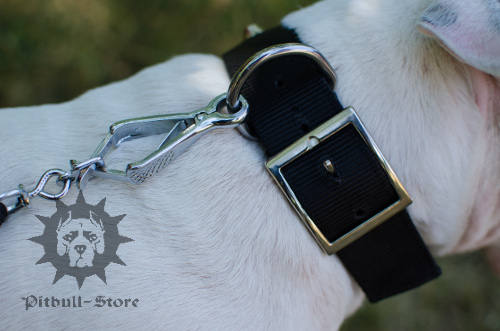 Bull Terrier Dog Collars UK