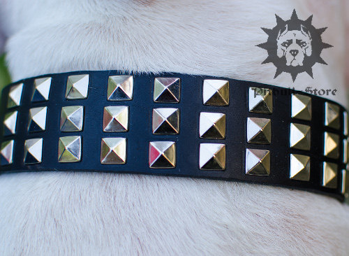 Head-spinning Wide Dog Collar